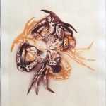 "Inedible II, lithography and chine colle on BFK, 15""x11"", 2008."